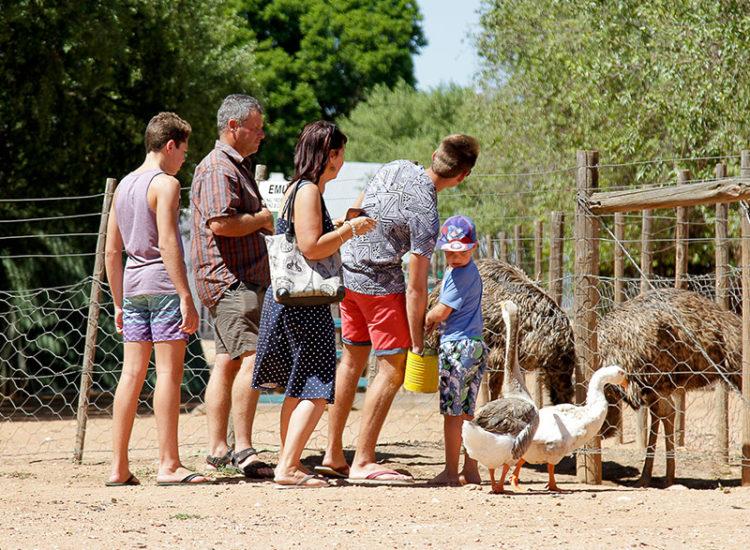 Animal Pet Farm