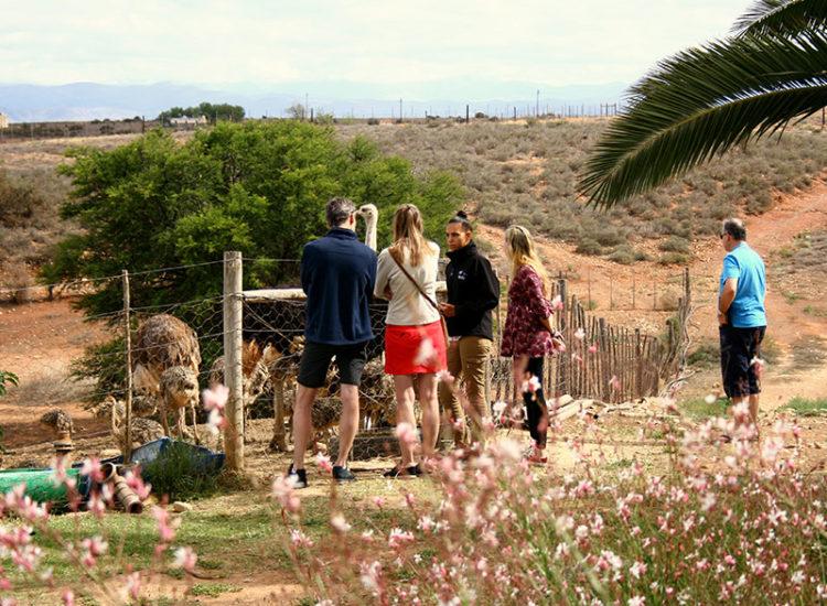 Klein Karoo Day Tours
