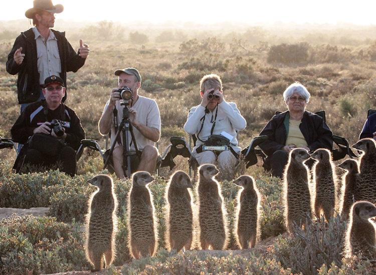 Five Shy Meerkat Tours