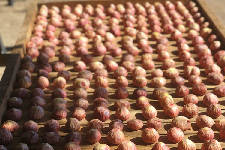 Drying Out Figs